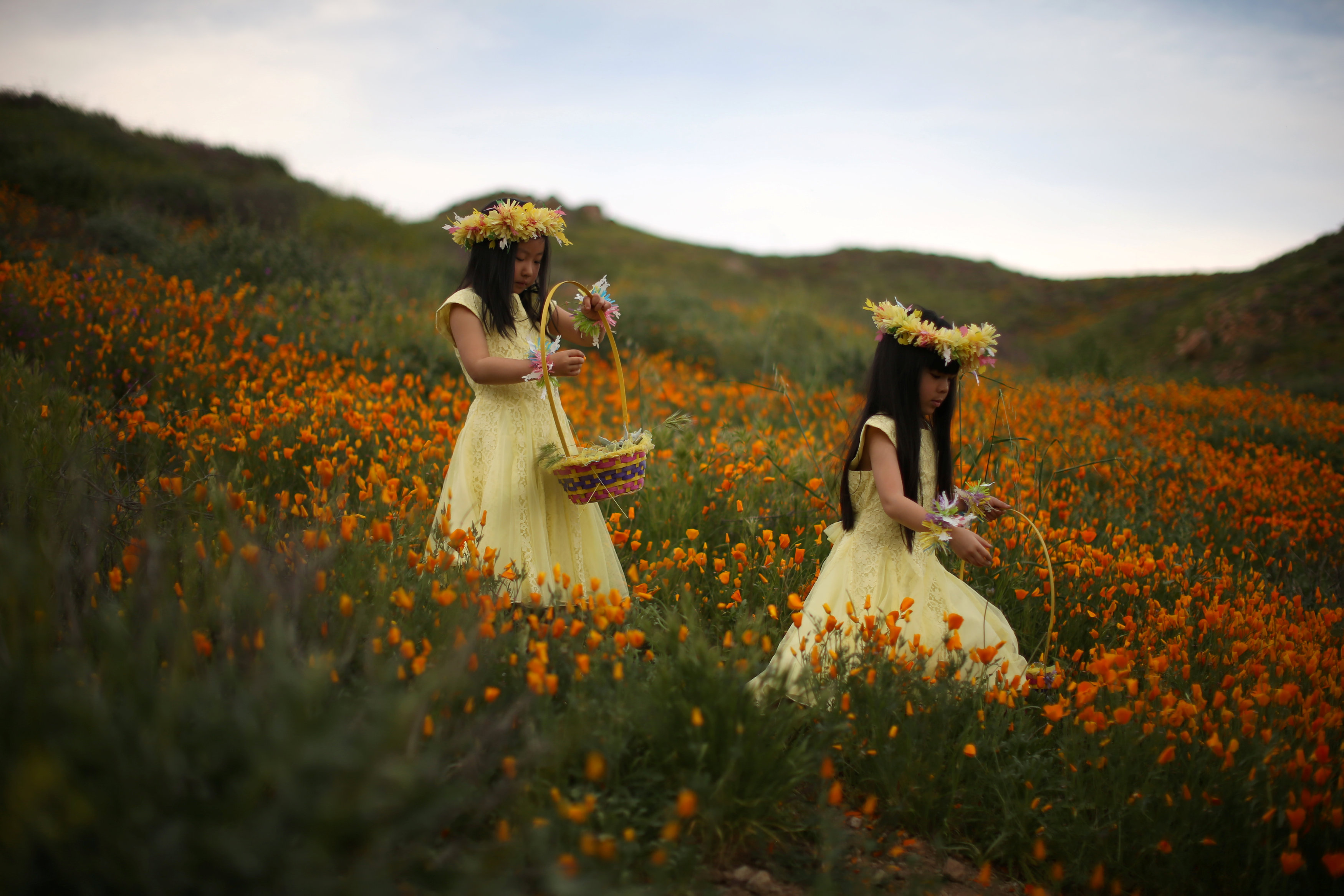 Julia Lu, 5, (L) and Amy Liu, 5, walk through a massive spring wildflower bloom caused by a wet winter in Lake Elsinore, California, US. PHOTO: REUTERS