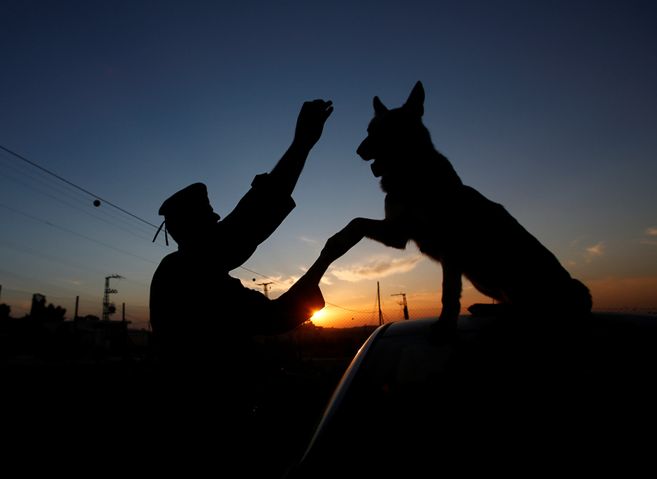 A Palestinian police officer teaches a dog obedience commands at a dog training facility in the West Bank city of Hebron. PHOTO: REUTERS