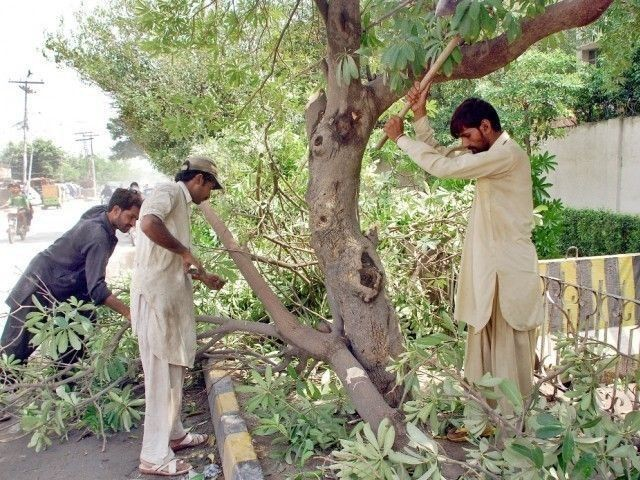 The three-judge bench expressed annoyance over cutting of trees in district Pishin of Balochistan.  PHOTO: EXPRESS