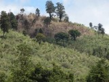 a-view-of-a-burned-area-in-the-logoman-forest-where-community-fire-scouts-put-out-a-fire-near-logoman-kenya-on-may-10-2017-thomson-reuters-foundationmoraa-obiria