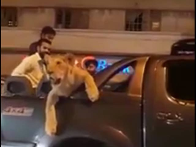 Pakistan arrests man for driving pet lion through Karachi streets