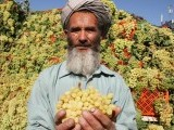 herat-grape-festival-2