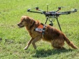 drones-swiss-rescue-dog-afp-1