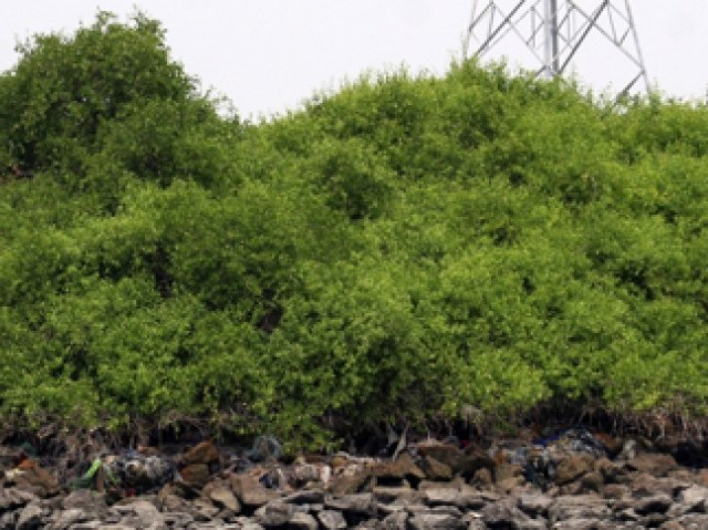 Number of mangrove forests in Sindh is gradually diminishing. PHOTO: ATHAR KHAN
