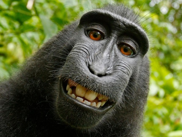 Photographer settles suit asserting monkey owned the copyright to his selfie