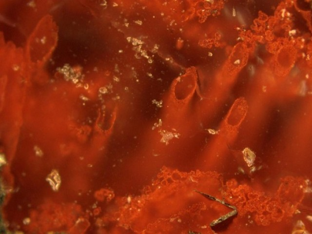 Life on Earth may date back 3.95b yrs