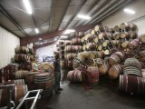 man-surveys-fallen-wine-barrels-after-a-6-0-earthquake-in-napa