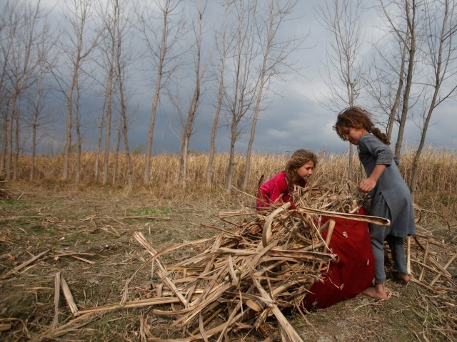 Young girls collect sugar cane husks for cooking and heating fuel in Charsadda, Pakistan.  PHOTO: REUTERS