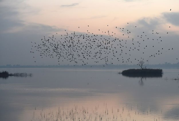 This picture taken on December 14, 2017 shows birds flying over the Rawal Lake, a water storage basin, in Islamabad. PHOTO: AFP