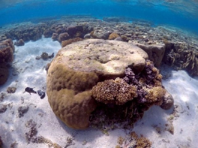 Coral reefs around globe being pummelled by climate change