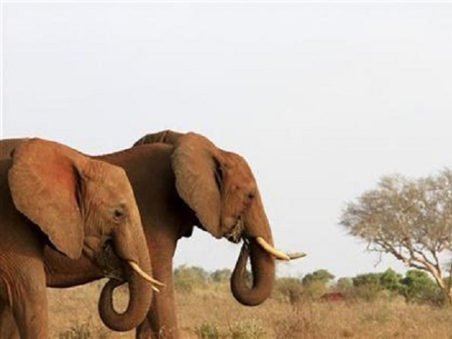 Four elephants were killed PHOTO: REUTERS