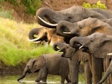 zimbabwe-elephants-reuters-2