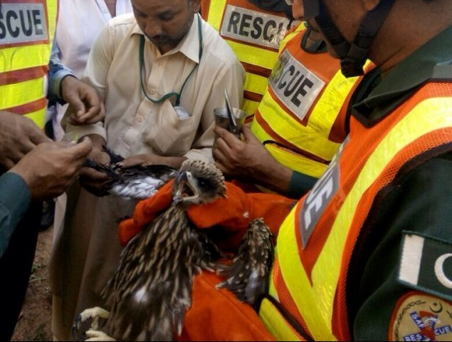 The bird was finally rescued after cutting the string it was entangled in. PHOTO: EXPRESS