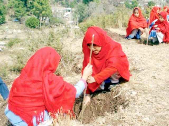 27 million trees planted under Green Plantation Programme