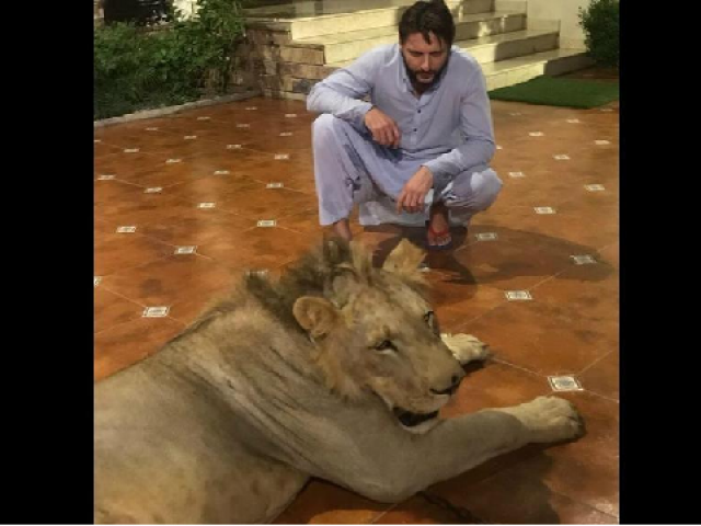 Shahid Afridi with his lion<br /> PHOTO: TWITTER