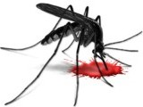 mosquito-dengue-blood-virus-fever-2-3-2-2-2-2-2-2-2-2-2-2-2-2-2-3-2-2-2-2-3-2-2-2-3-2-2-2-3-3-2-2-2-2