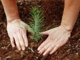 building-peace-through-environmental-conservation-2-2-2-2-2