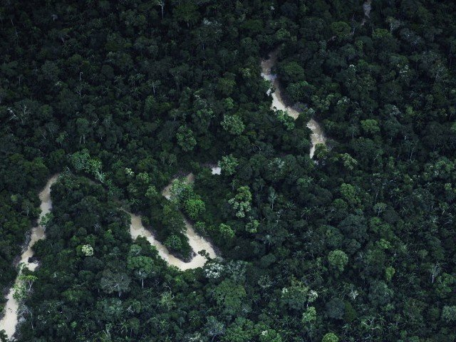 Brazil cuts deforestation emissions below 2020 targets. PHOTO: REUTERS