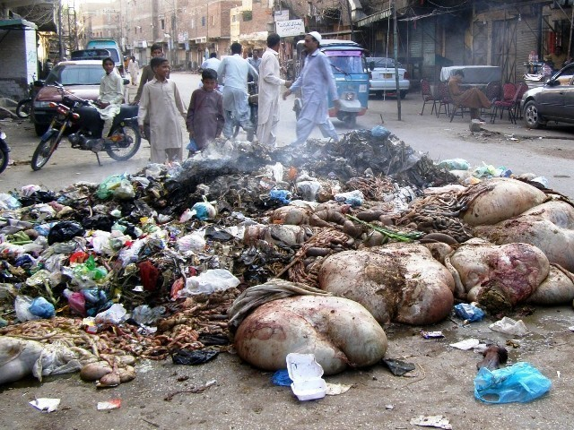 Offal lays in a pile of garbage. PHOTO: SHAHID ALI