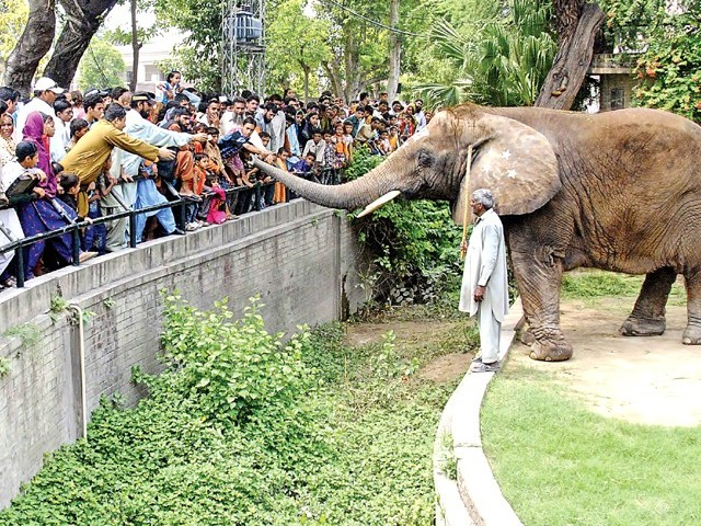 Dubious trade fear delays arrival of animals at Lahore Zoo. PHOTO: SHAHBAZ MALIK/EXPRESS