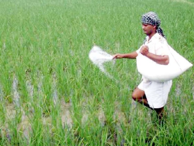 The present price of urea bag is Rs1,615 and the imported price is Rs2,575. The difference of Rs960 will be paid by the government in subsidy. PHOTO: REUTERS