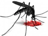 mosquito-dengue-blood-virus-fever-2-3-2-2-2-2-2-2-2-2-2-2-2-2-2-3-2-2-2-2-3-2-2-2-3-2-2-2-3-3-2-2-2-2-2