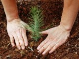 building-peace-through-environmental-conservation-2-2-2-2-2-2-2