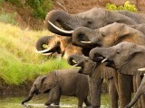 zimbabwe-elephants-reuters-3