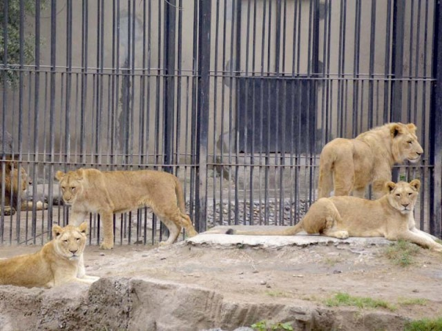 Lahore Zoo | The Express Tribune