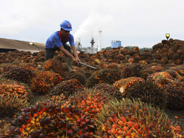 European Commission says palm oil cultivation results in deforestation. PHOTO: REUTERS