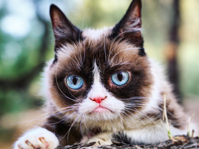 Meme star Grumpy Cat has died, aged 7