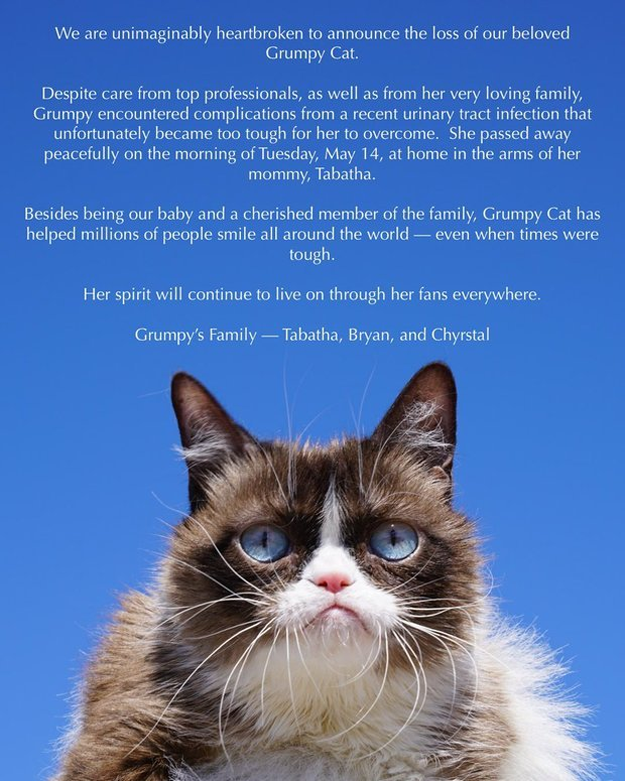 Fans mourn as internet-famous Grumpy Cat dies aged 7