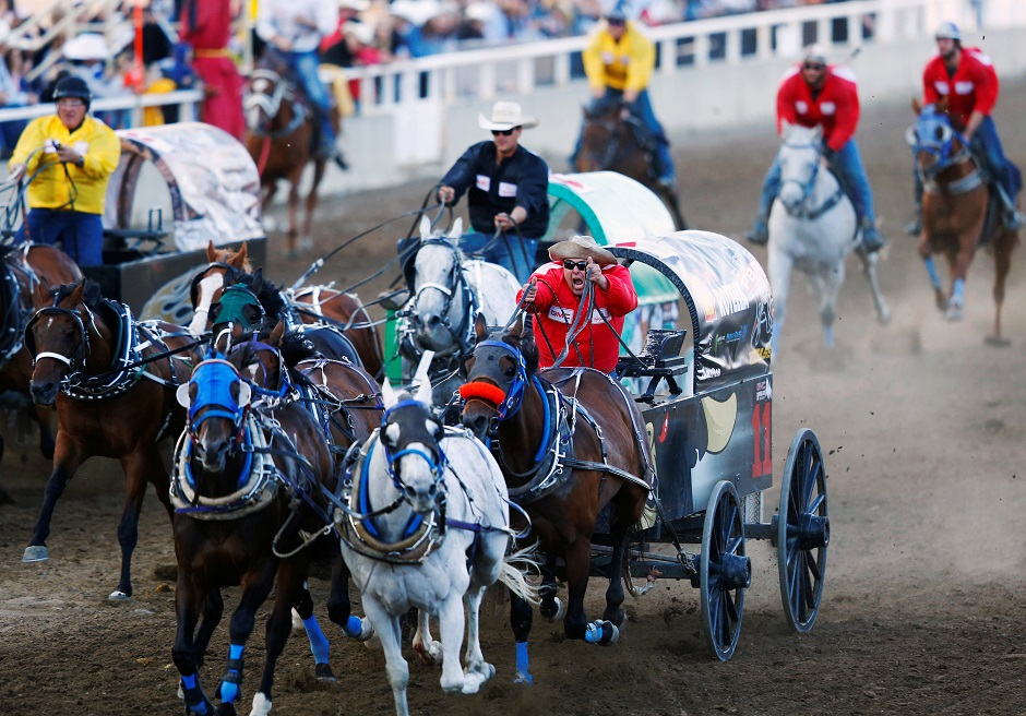 Darcy Flad leads in the field home while racing his team in the third heat in the chuckwagon races during the Calgary Stampede in Calgary,Canada:REUTERS