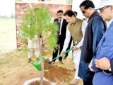 PM Imran waters a tree during monsoon plantation drive in Islamabad. PHOTO: NNI