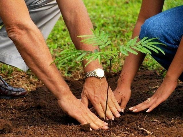CM Punjab inaugurates monsoon tree plantation campaign | The ...