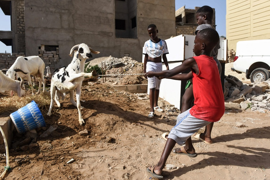 A boy uses a rope to pull a goat as people celebrate the first day of Eidul Azha (Feast of Sacrifice) in Oukam. PHOTO: AFP