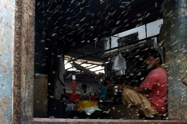 Illnesses are on the rise in Karachi because of flies and mosquitoes, according to a health activist (Photo: AFP)