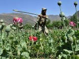 afghanistan-unrest-crime-drugs-files-2