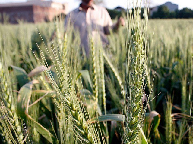 Prices will be reduced despite limited wheat availability, high cost. PHOTO: FILE