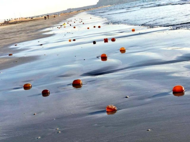 Numerous jellyfish have washed onto the Sindh and Balochistan coast from the Arabian Sea. The latest jellyfish blooms appeared in December 2019 and may be a result of over-fishing and climate change. PHOTO: COURTESY WWF-P