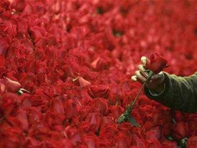 A rose. PHOTO: REUTERS